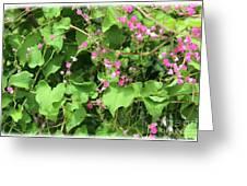 Pink Flowering Vine1 Greeting Card
