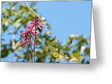 Pink Flowers At Coba Greeting Card