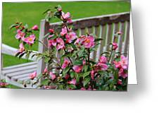 Pink Flowers By The Bench Greeting Card