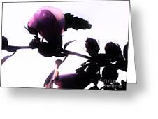 Pink Flowers In Empty Space Greeting Card