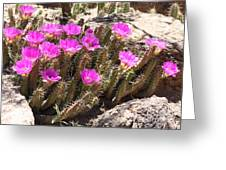 Pink Flowers In The Desert Greeting Card