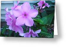 Pink Flowers In The Garden Greeting Card