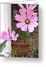 Pink Flowers Of Summer Greeting Card