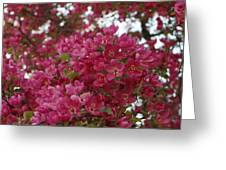 Pink Flowers On Blooming Tree Greeting Card