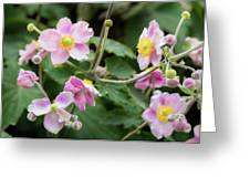 Pink Flowers Over Green Greeting Card