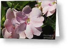 Pink Flowers P79 Greeting Card