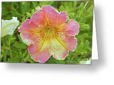 Pink Flowers P80 Greeting Card