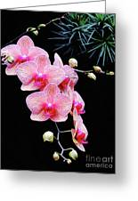 Pink Flowers Pink Vein Black Background Greeting Card