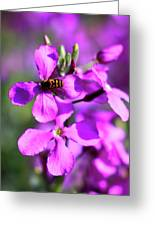 Pink Flowers With Bee . 40d4803 Greeting Card