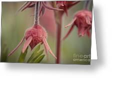 Pink Fuzz 4 Greeting Card