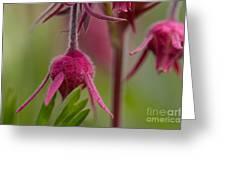 Pink Fuzz 6 Greeting Card