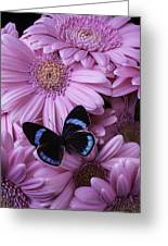 Pink Gerbera Daises And Butterfly Greeting Card