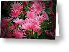 Pink Gerbera Heaven Greeting Card