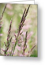 Pink Grass Greeting Card