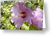 Pink Hawaiian Flowers Greeting Card