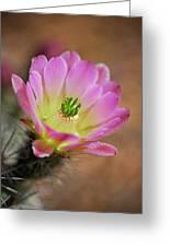 Pink Hedgehog Cactus Greeting Card