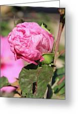 Pink Hibiscus Bud Greeting Card