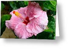 Pink Hibiscus Flower 1 Greeting Card