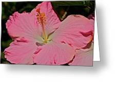 pink hibiscus I Greeting Card