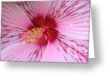 Pink Hibiscus Macro Greeting Card