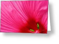 Pink Hibiscus Petals Greeting Card
