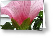 Pink Hibiscus Ready To Bloom Greeting Card