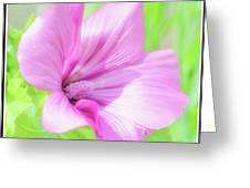 Pink Hollyhock Flower Greeting Card