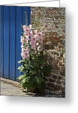 Pink Hollyhocks Growing From A Crack In The Pavement Greeting Card