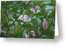 Pink Honeysuckle Greeting Card