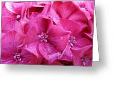 Pink Hydrangea After Rain Greeting Card