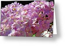Pink Hydrangea Flower Floral Art Prints Baslee Troutman Greeting Card