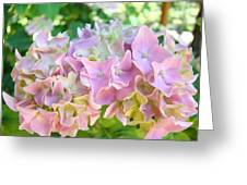 Pink Hydrangea Flower Garden Art Prints Baslee Troutman Greeting Card