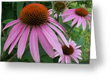 Pink In The Garden Greeting Card