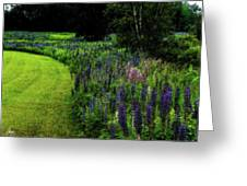 Pink In The Lupine Margin Greeting Card