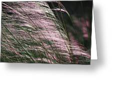 Pink In The Wind   Greeting Card