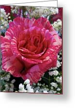 Pink Intuition Rose Greeting Card