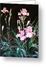 Pink Irises Greeting Card