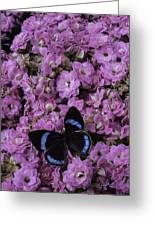 Pink Kalanchoe And Black Butterfly Greeting Card