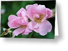 Pink Knockout Rose After The Rain Greeting Card