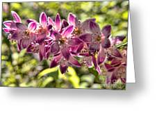 Pink Ladies In Spring Glory Greeting Card