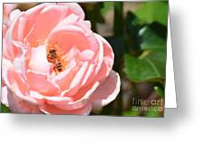 Pink Lady - Rose Greeting Card