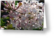 Pink Lilac Blossom Greeting Card