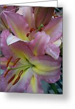 Pink Lillies Greeting Card