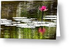 Pink Lily 12 Greeting Card