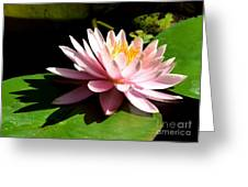 Pink Lily 9 Greeting Card