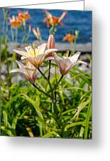 Pink Lily By The Lake Greeting Card