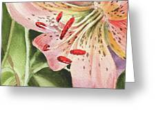Pink Lily Close Up Greeting Card