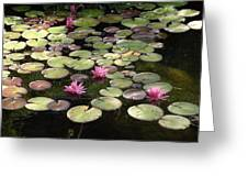 Pink Lily Pads Greeting Card