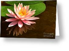 Pink Lily Reflection 4 Greeting Card