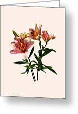 Pink Lily Trio Greeting Card